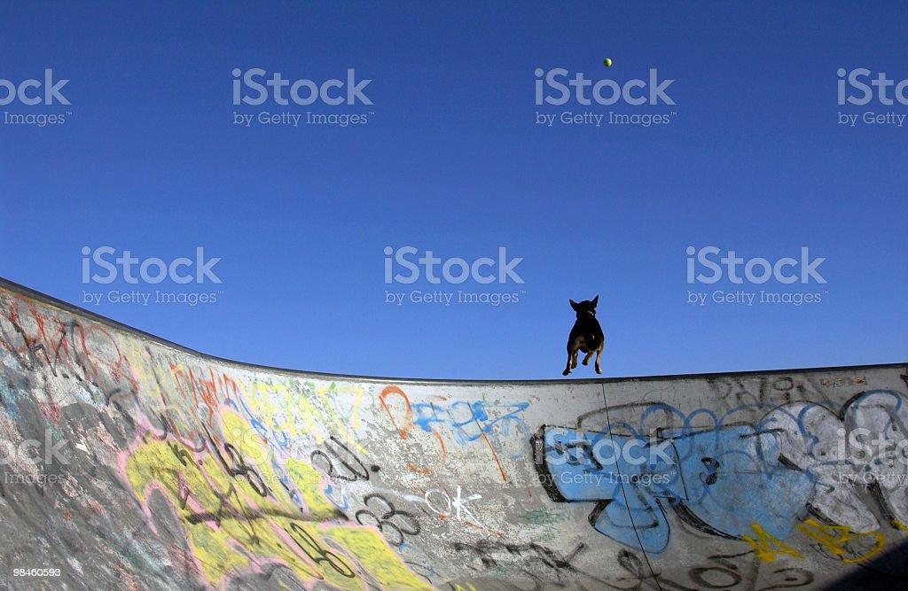 Skate Ramp, Dog, Ball royalty-free stock photo