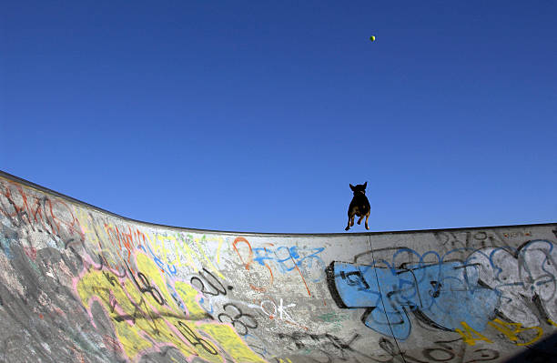 Skate Ramp, Dog, Ball stock photo