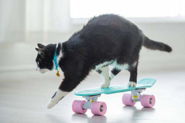 Skateboarding cat picture id685958228?b=1&k=6&m=685958228&s=612x612&w=0&h=pho2gnptsc1rgvcz  4tffc5xconhbfodb1yehnw0ai=