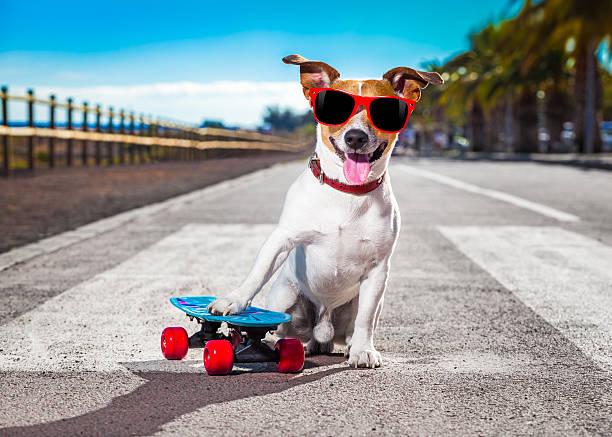 Chien de skate-board - Photo