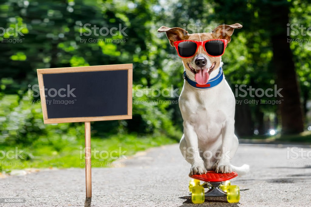 Chien de skate-board - Photo
