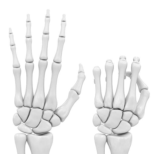 Royalty Free Skeletal Hand Pictures Images And Stock Photos Istock