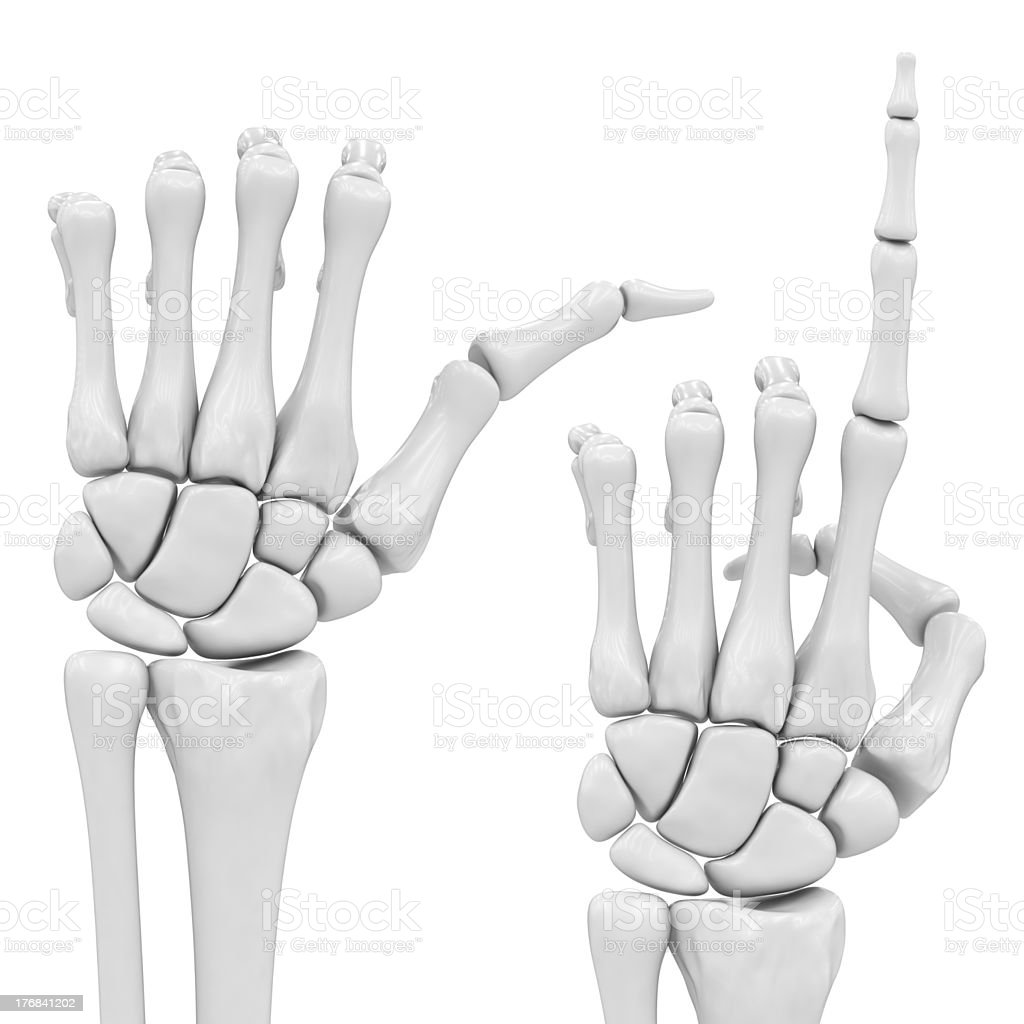 Skeletal Hand Stock Photo More Pictures Of Agreement Istock