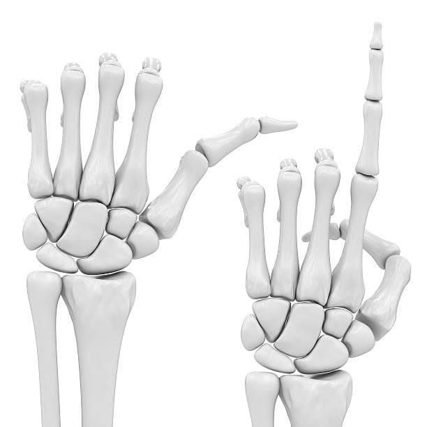 ungewohnter hand - skelett hand stock-fotos und bilder