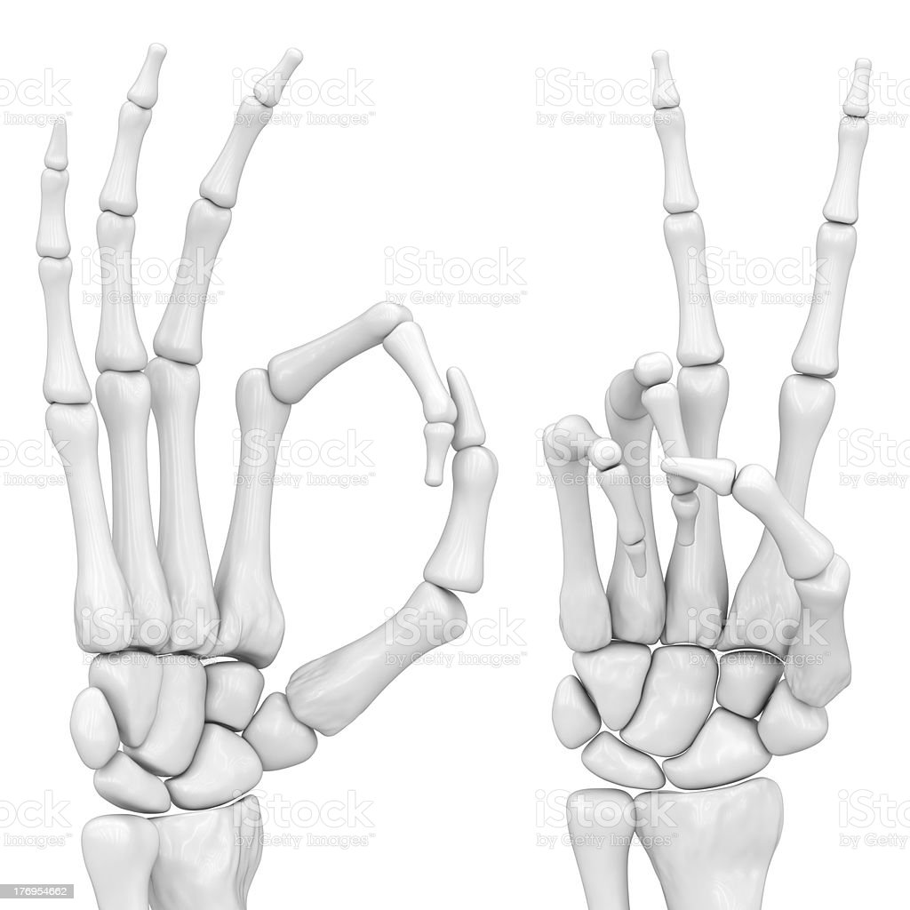 Skeletal Hand Stock Photo More Pictures Of Achievement Istock