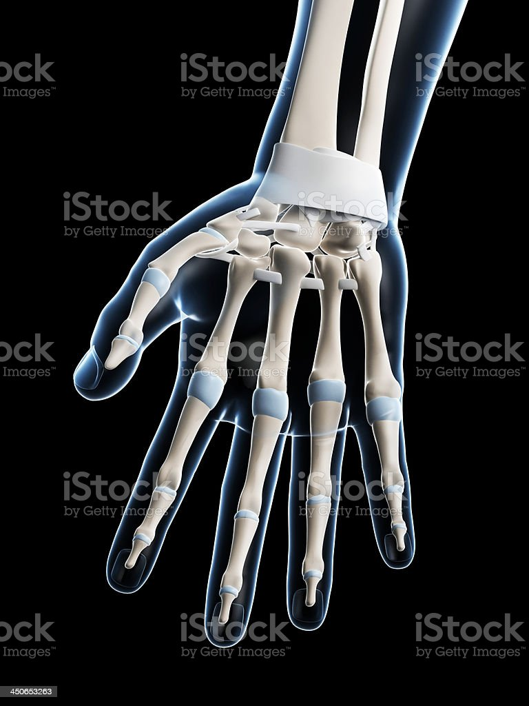 Skeletal Hand Stock Photo Istock