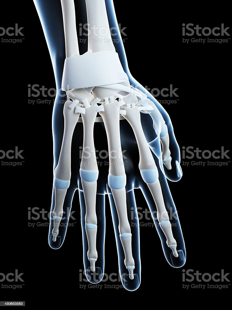 Skeletal Hand Stock Photo More Pictures Of Anatomy Istock