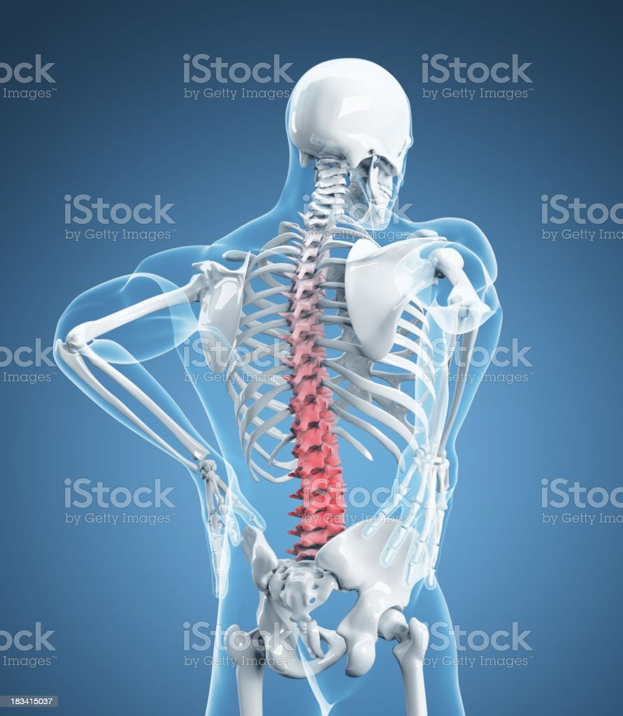 Skeletal Image Representing Lower Back Pain Stock Photo More