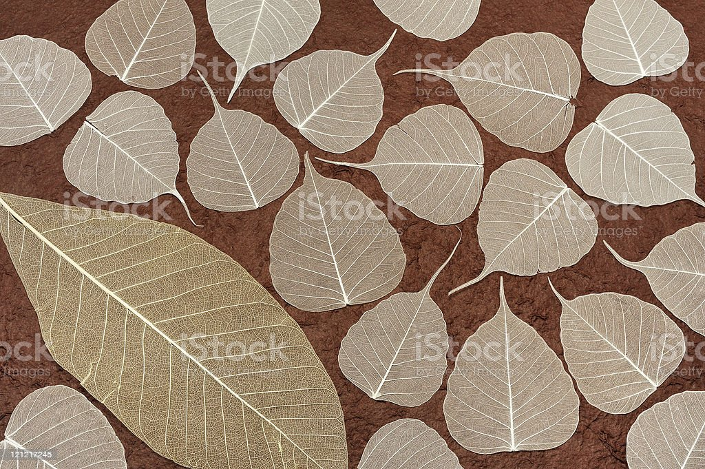 Skeletal leaves over brown handmade paper - background royalty-free stock photo