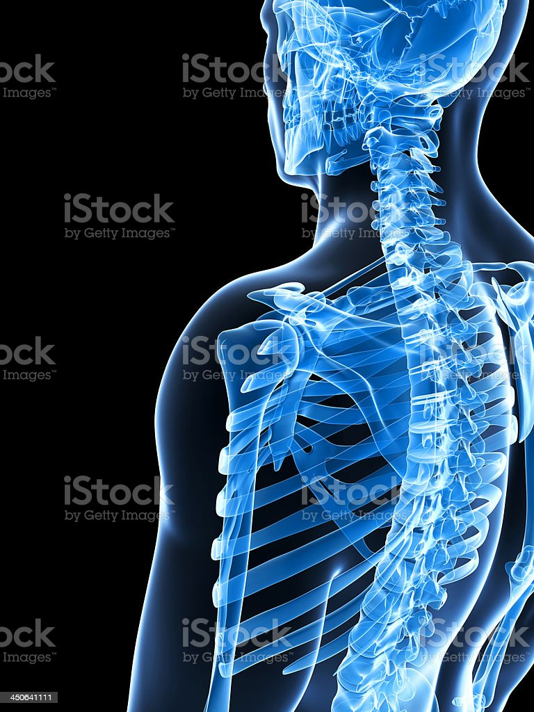 skeletal shoulder royalty-free stock photo