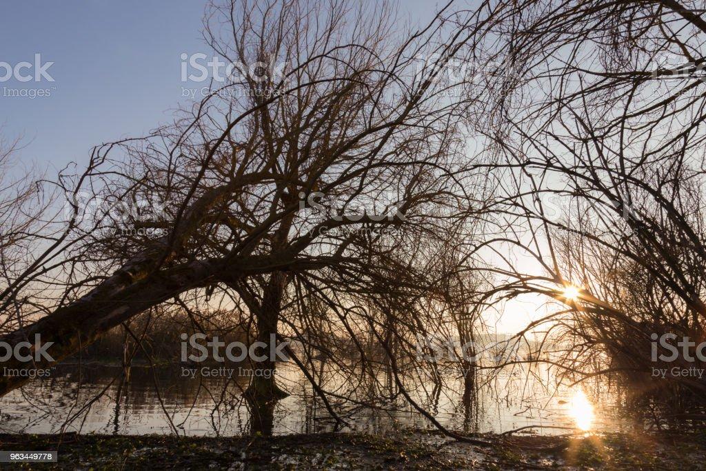 Gün batımında, b yapma dalları ile göl kıyısında iskelet ağaçlar - Royalty-free Ahşap Stok görsel