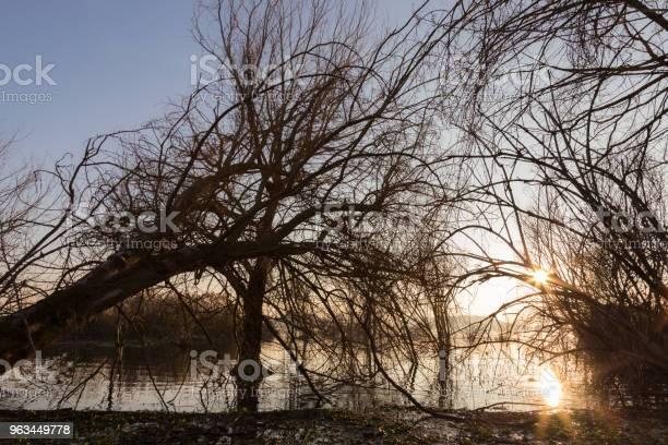 Gün Batımında B Yapma Dalları Ile Göl Kıyısında Iskelet Ağaçlar Stok Fotoğraflar & Ahşap'nin Daha Fazla Resimleri