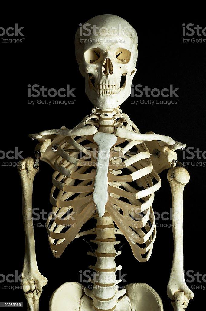 Skeleton 1 royalty-free stock photo