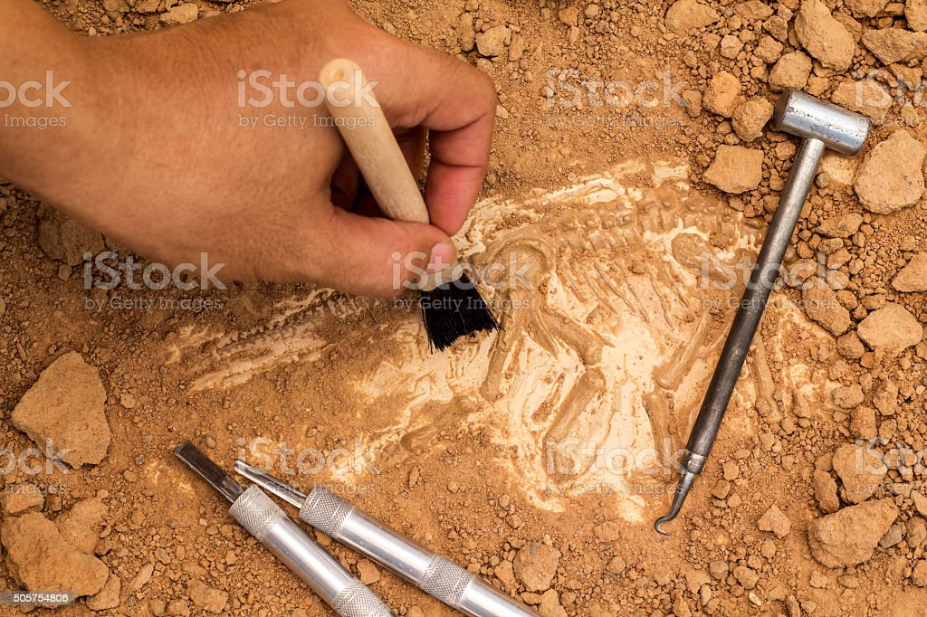 Skeleton and archaeological tools. stock photo