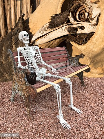 Composite image of a raven skull, bison skull and human skeleton sitting on a bench with a jug.