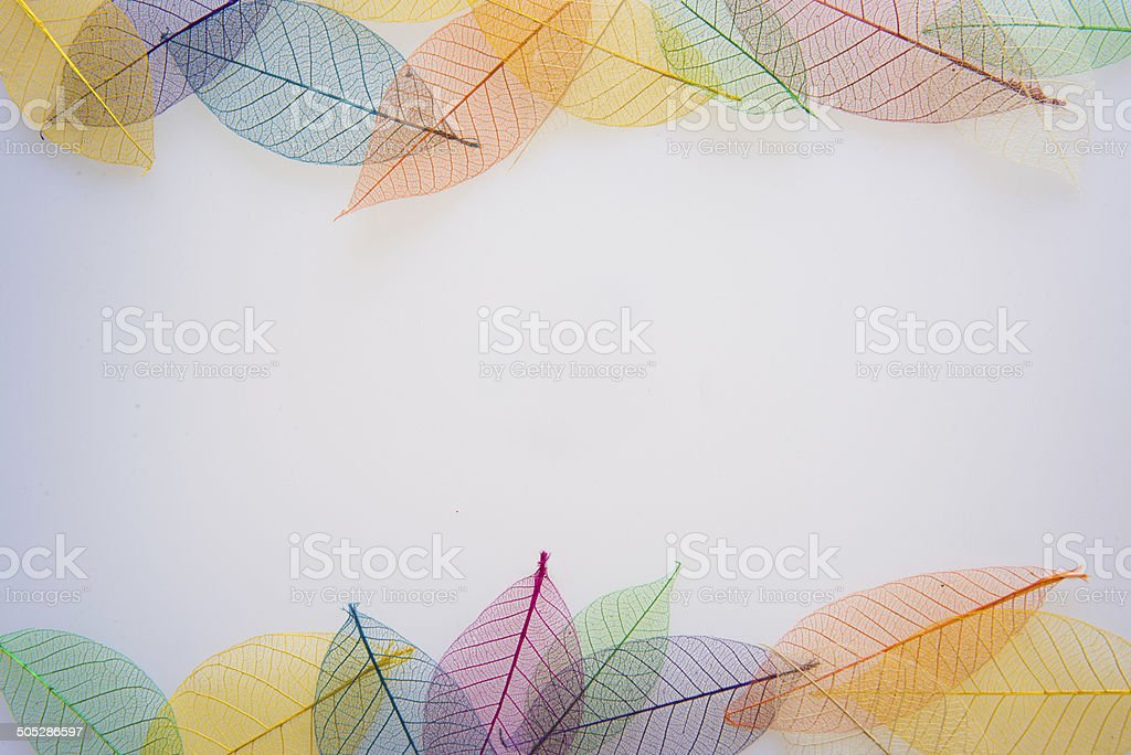 Skeleton color Leaves stock photo