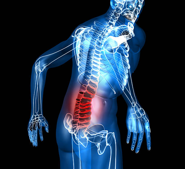a skeleton depiction with back pain - low section stock photos and pictures