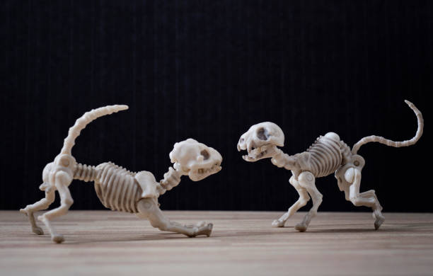 Skeleton dog and cat Skeleton dog and skeleton cat fighting cat skeleton stock pictures, royalty-free photos & images