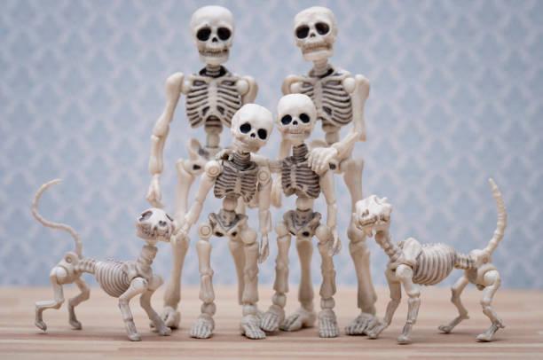 Skeleton family portrait picture id856979818?b=1&k=6&m=856979818&s=612x612&w=0&h=rnpwgizn0jhrgtgismk58dbqg pd1jwb0w4 emv5gxw=