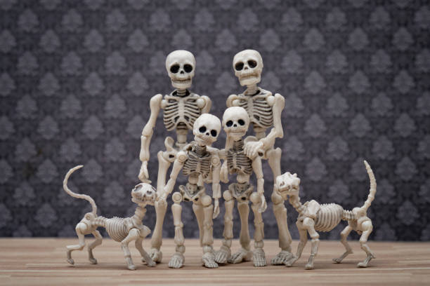 Skeleton family portrait Skeleton family portrait with family pets cat skeleton stock pictures, royalty-free photos & images