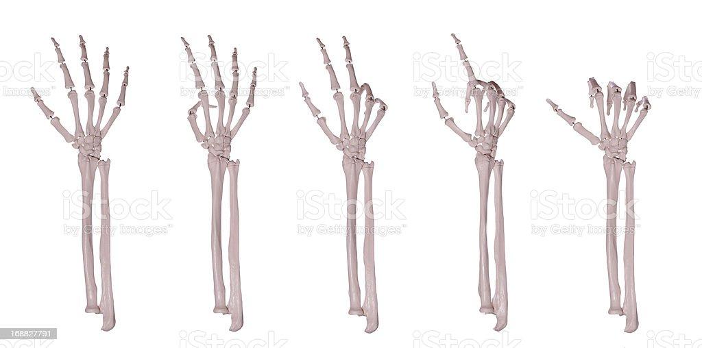 Fotografía de Esqueleto Manos Recuento 15 y más banco de imágenes de ...