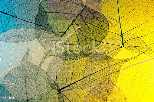 istock Skeleton leaf abstract 482429122
