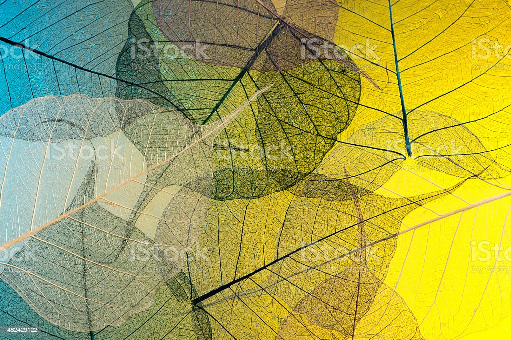Skeleton leaf abstract stock photo