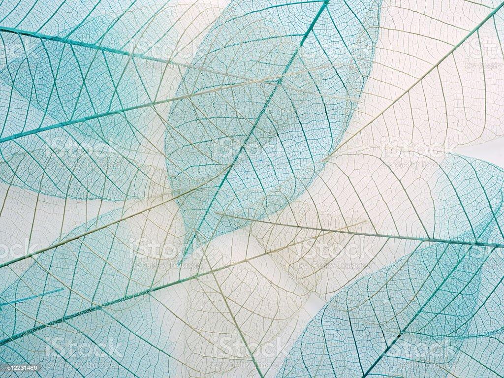 Skeleton leaf background, close up. stock photo