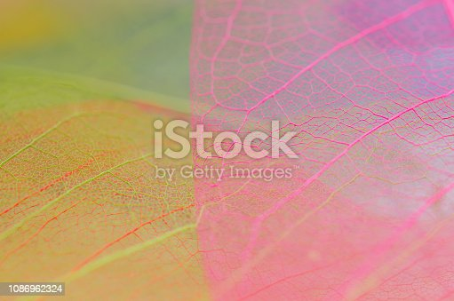 istock Skeleton leafs background. On a wooden background 1086962324