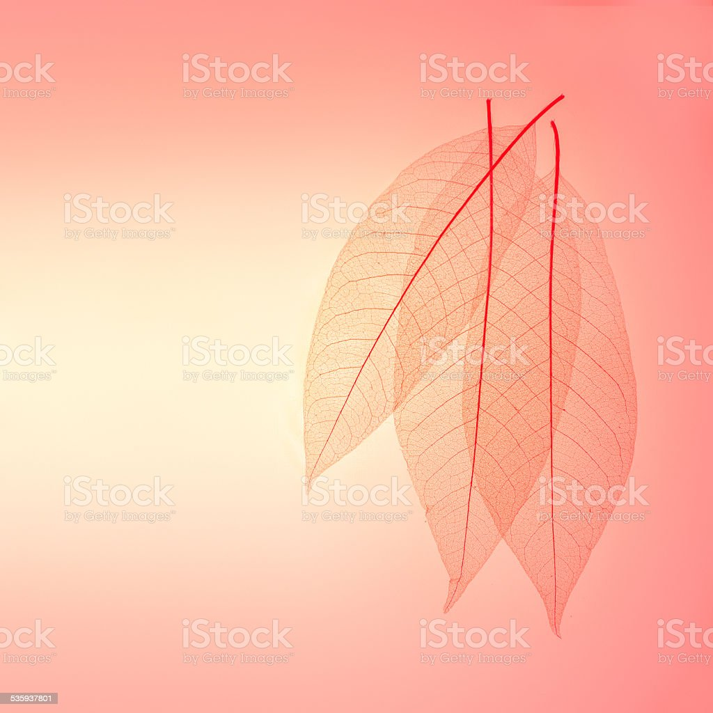 Skeleton leaves background stock photo