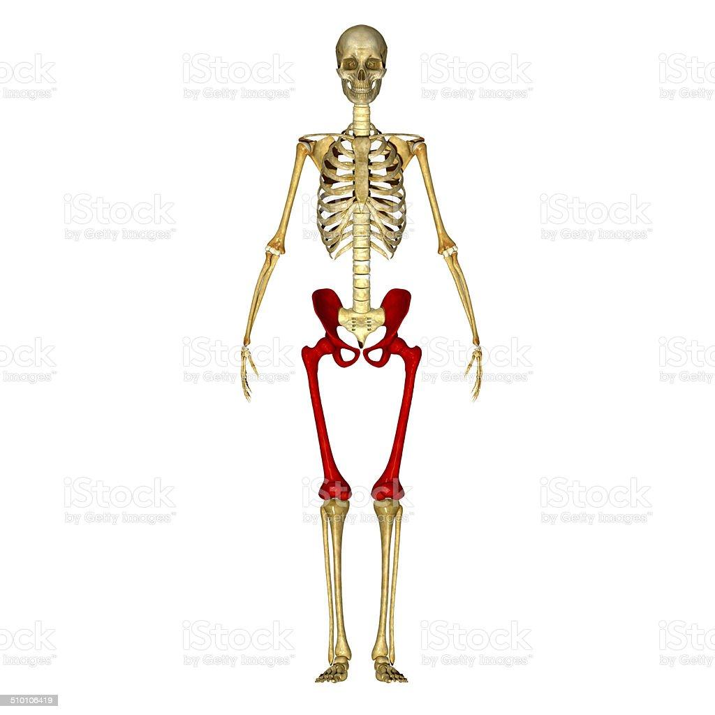 Fotografía de Esqueleto Piernas Con La Cadera y más banco de ...