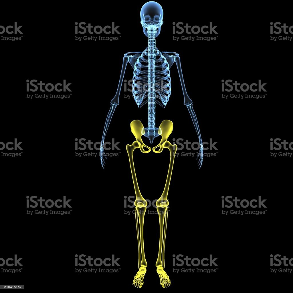 Skeleton Legs With Hip Stock Photo More Pictures Of Advice Istock