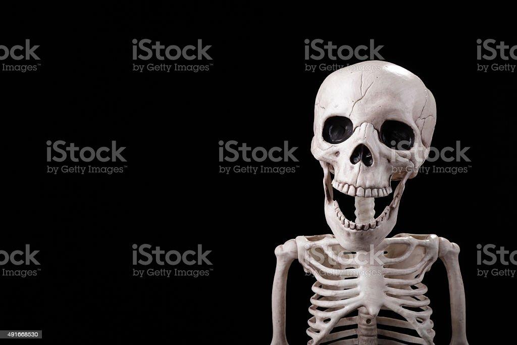 Skelett Blick In Die Kamera Stockfoto 491668530 | iStock