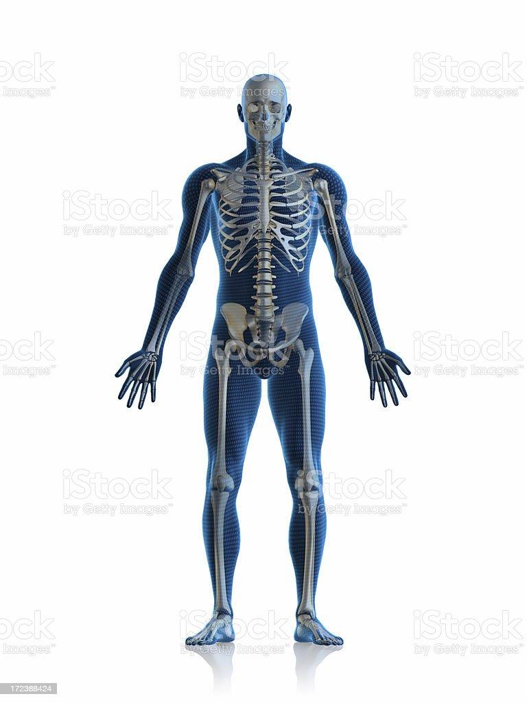 Skeleton man stock photo