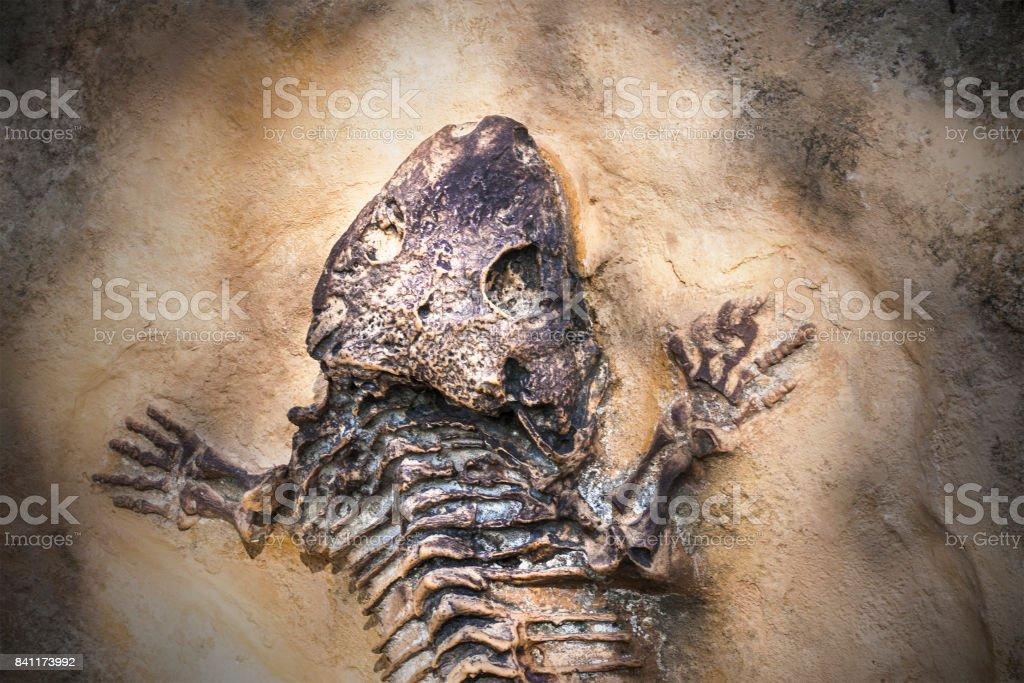 Skeleton of ancient extinct animal stock photo