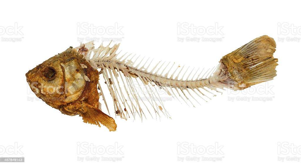 Skeleton of fish stock photo
