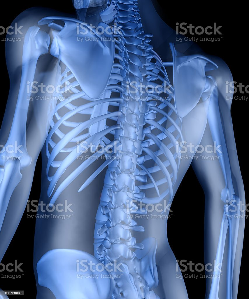 Skeleton of the man stock photo
