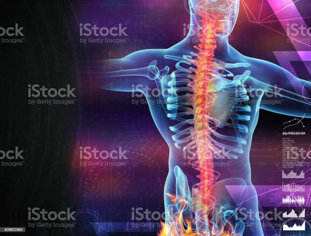 Skeleton of the man with the backbone stock photo