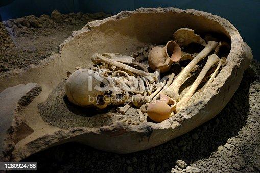 skeleton in museum