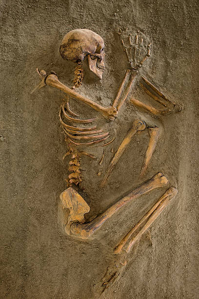 Skeleton Skeletons of ancient tombs ,Location of excavation Lepenski Vir ,Serbia archaeology stock pictures, royalty-free photos & images