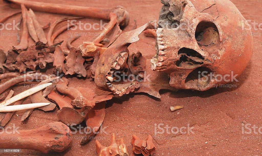 Skeleton remains stock photo