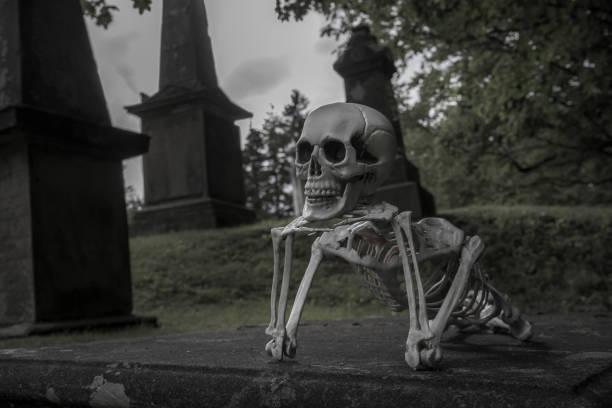skelett auf einem friedhof ruhen - halloween grabsteine stock-fotos und bilder