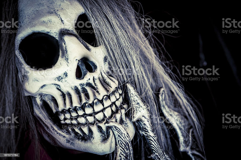 Skeleton Skull Portrait Halloween stock photo