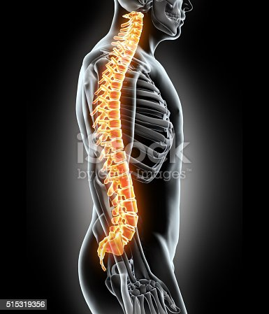 istock Skeleton system - X-ray human spine. 515319356