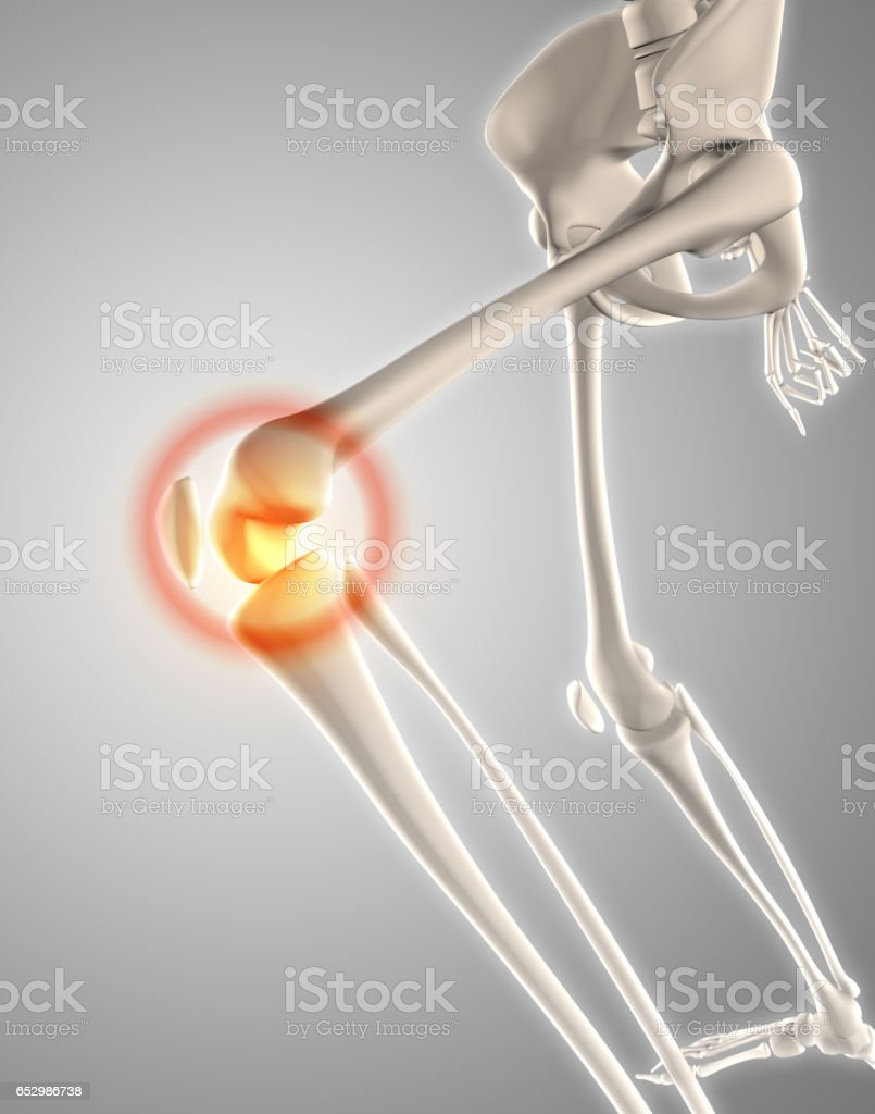 3d Skeleton With Knee Highlighted Stock Photo More Pictures Of