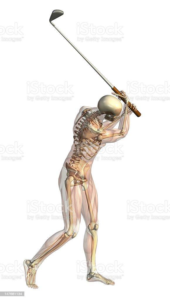 Fotografía de Esqueleto Con Semitransparente Músculoscolumpio De ...