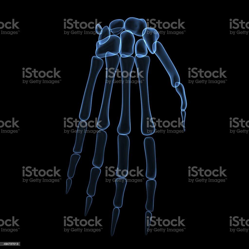 Skelett Handgelenk Stock-Fotografie und mehr Bilder von Anatomie ...