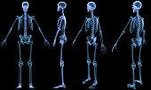 Skeleton-4 views x-ray