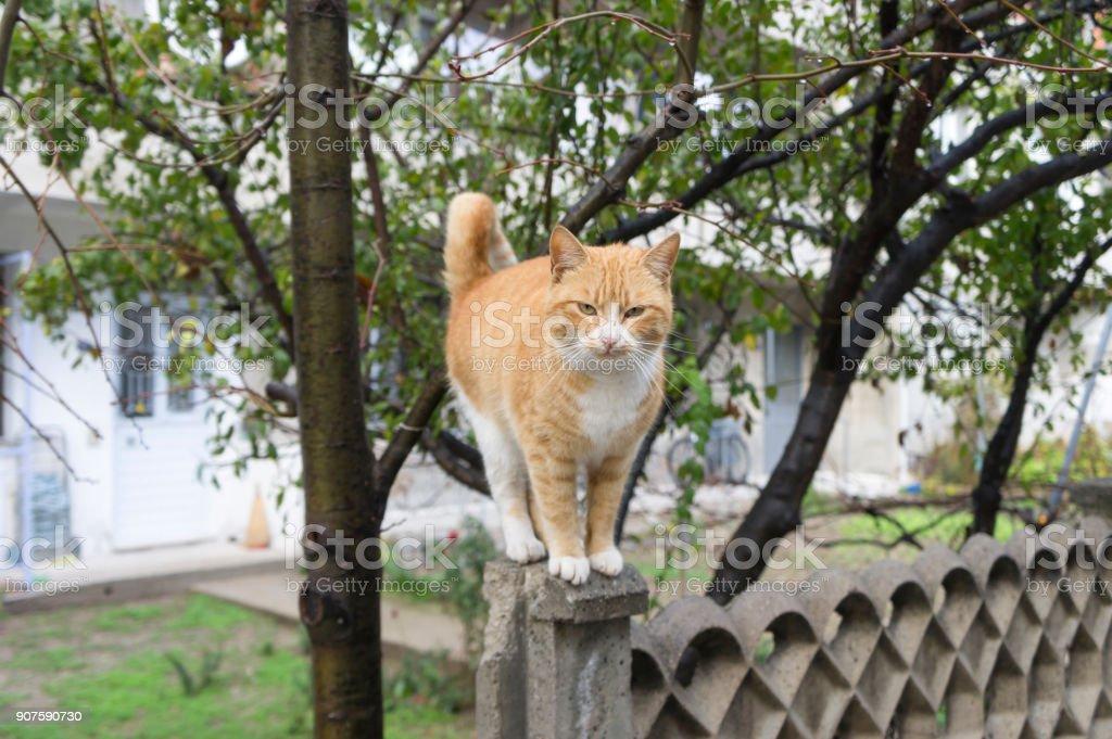 Skeptical cat looks stock photo