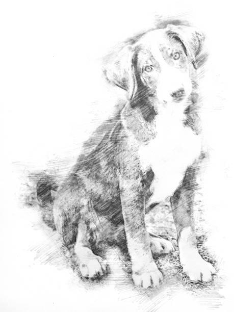 esboço - appenzeller cachorro sentado e esperando - cachorro desenho - fotografias e filmes do acervo